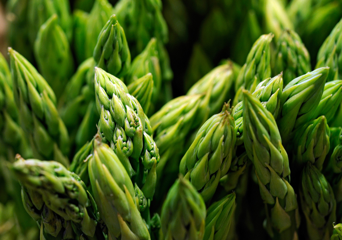 Middleton Six Sons Farms » Farm Fresh Asparagus